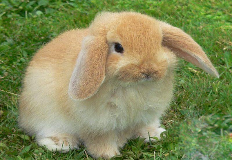 Il coniglio. Animale da compagnia o ingrediente principale dei nostri piatti?