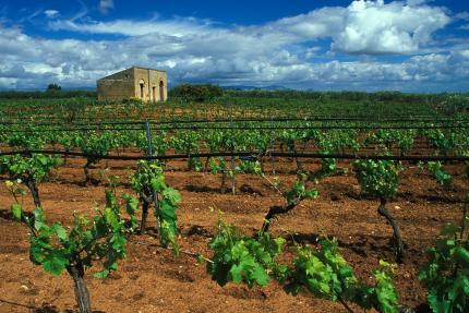 Wine in Sicily. Non solo vini, ma il meglio della Sicilia