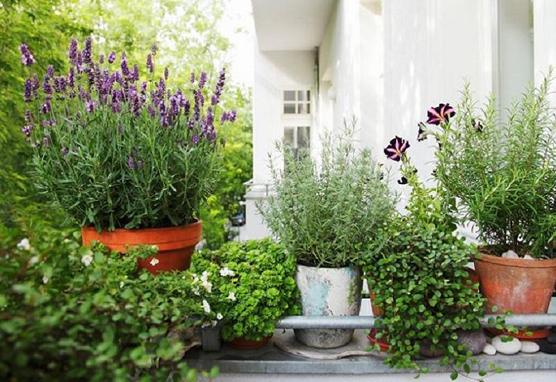 Come salvarle dal freddo le piante in terrazzo