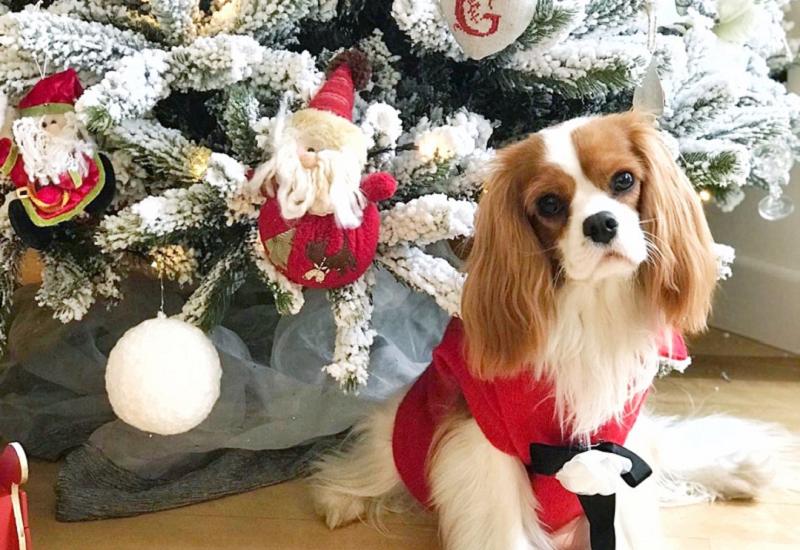 Creare l'atmosfera perfetta per le feste di Natale con i consigli dell'home stylist Viviana Grunert