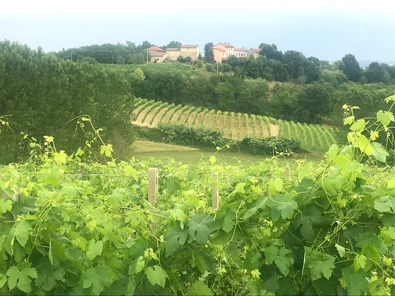 Viaggio nel Monferrato