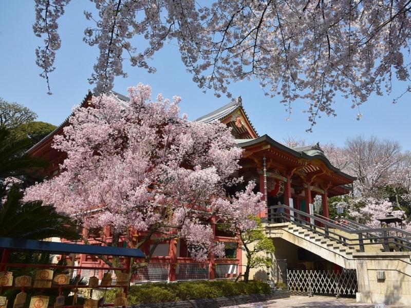 Viaggio virtuale a Tokyo tra natura e musei